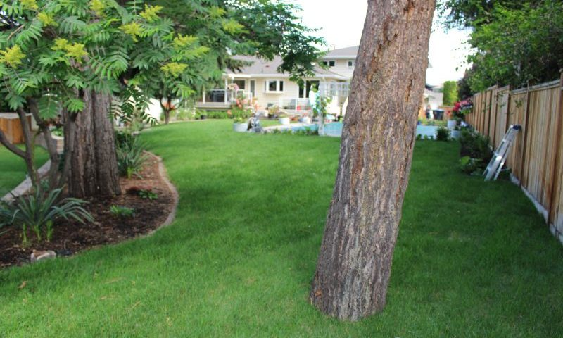 beautiful backyard with green weed free lawn