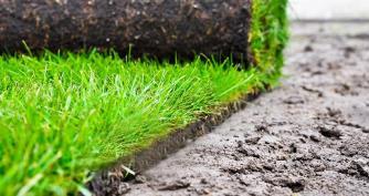 Grass overseeding and turf installs