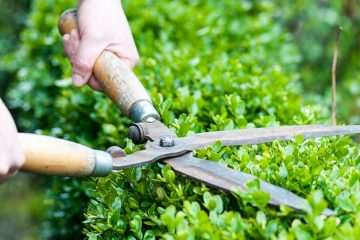 Lawn & Yard Maintenance