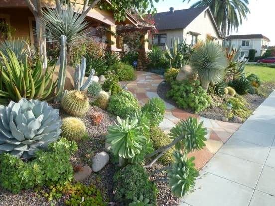 water-conserving-plants-landscaping