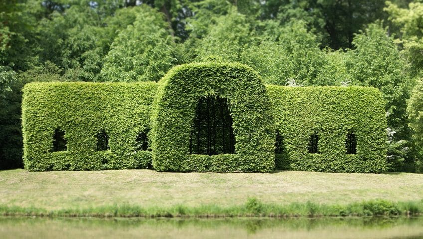 how-to-trim-cedar-hedges