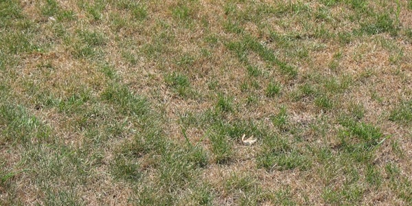 dead-summer-drought-dormant-lawn