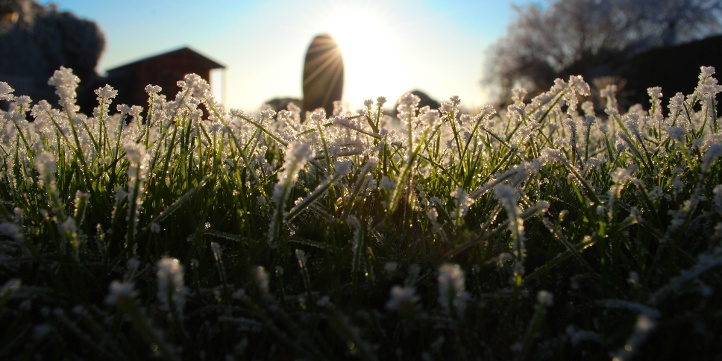 frost-damage-to-grass