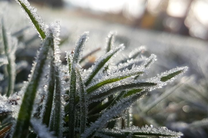 frost-on-grass