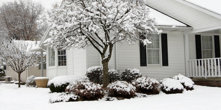protecting landscaping during winter months